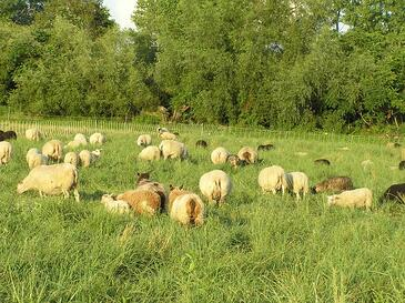 sheepfarm20-1uwsiqc